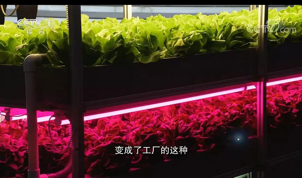 植物工厂央视10.webp.jpg